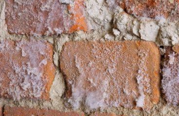 Se débarrasser des salpêtres sur les murs de l'habitation