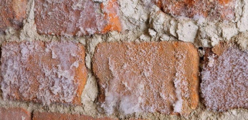 salpetre et mur humide